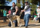 RSPCA Million Paws Walk Geelong