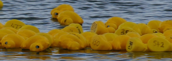 Barwon Heads Festival of the Sea Duck Race