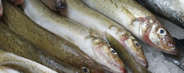 King george whiting intown geelong for Whiting fish picture